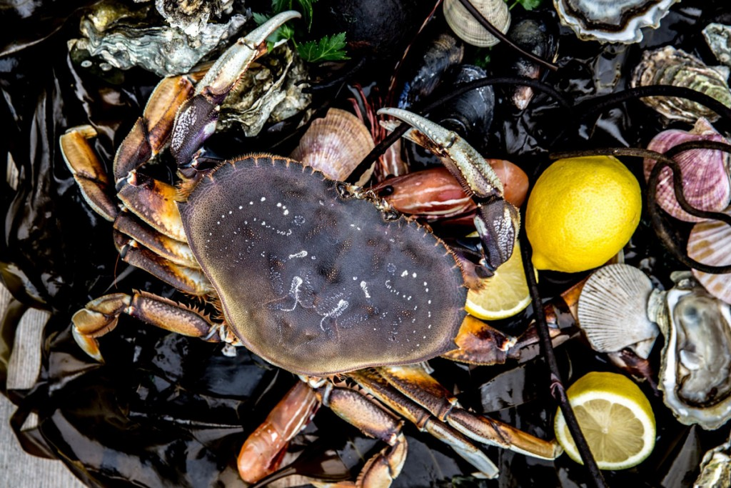 crabs and clams